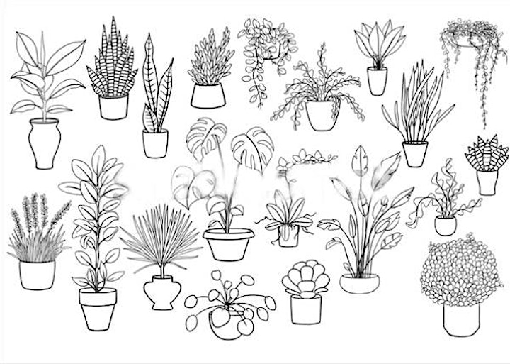 Doodling Potted Plants,  Class for Teens and Adults image