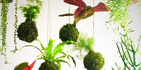 Kokedama Workshop - They're back at Green Lady Gardens! tickets