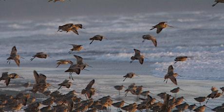 Shorebirds at Point Reyes tickets