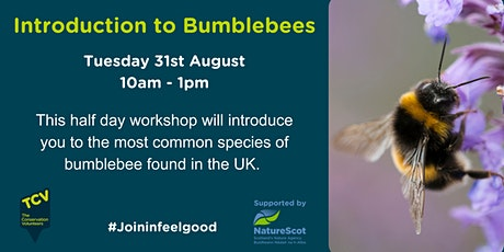 Introduction to Bumblebees tickets