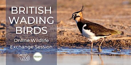 British Wading Birds - online talk tickets