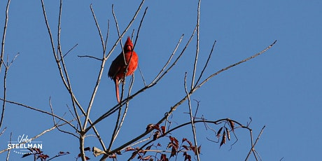 Introduction to Birding-VIRTUAL tickets