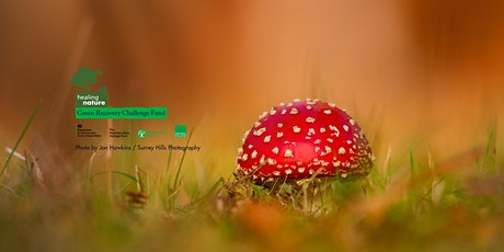 Childrens Forest, Fungal Foray Fun  - Healing Nature tickets