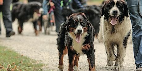 National Dog Date Community Dog Walk at Birds Marsh View tickets