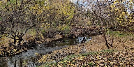 Tree Photography Walk in Fletchers Creek SNAP Neighbourhood tickets