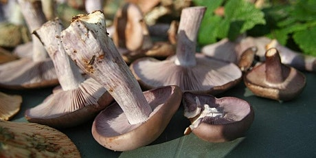 Early Autumn Fungi Foray in Redisher Woods tickets
