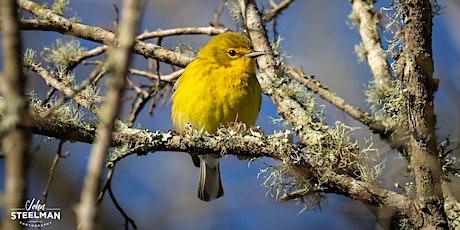 Birds Eye View on Behavior - VIRTUAL tickets