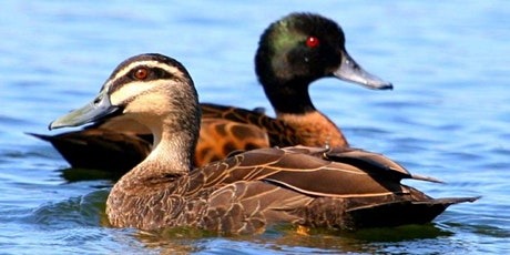 Wonderland of Winter Waterfowl - VIRTUAL tickets