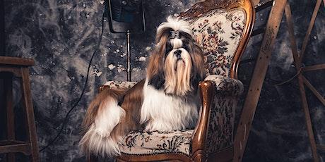 Séance Photo  à Tom & Co Nivelles billets