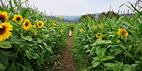 AP Summer Programme Clearwell Farm Sunflower Maize Maze tickets