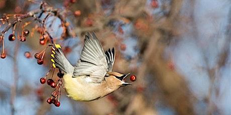 Birdwalks with New York City Audubon tickets