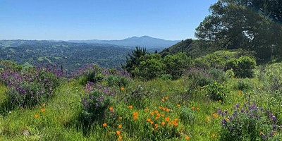 Exploring the Many Stories and Uses of Native Plants