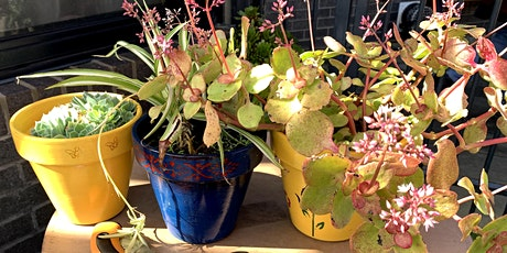 'Garden Conversations' - Planting and Painting Pots tickets