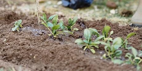 Compost like a Champion - Free Mornington Peninsula Seniors Festival event tickets