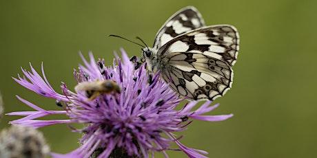 Les Papillons : Mythes et réalités ! billets
