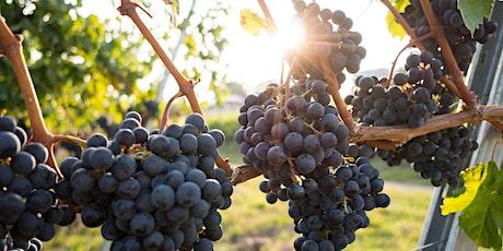 L'Uva Italian Wine Tasting - A Taste of Piemonte tickets