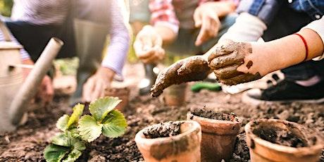 Greenford Quay Summer Series - Children's gardening and wellness workshop tickets