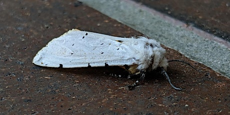 Moth Night at Downsview Park tickets