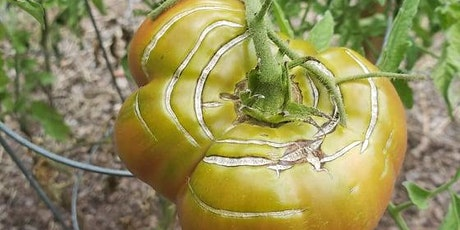 Whats Wrong With My Tomato? tickets