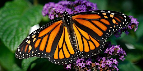 Annual Monarch Butterfly Release - Saturday 9/18 11:00 AM Session tickets