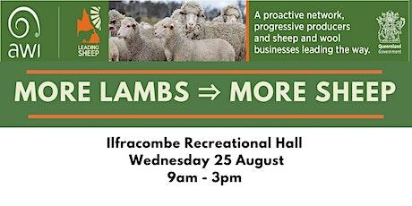 More lambs → more sheep - Ilfracombe tickets