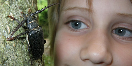 Incredible invertebrates...outdoor learning for the home educated community tickets