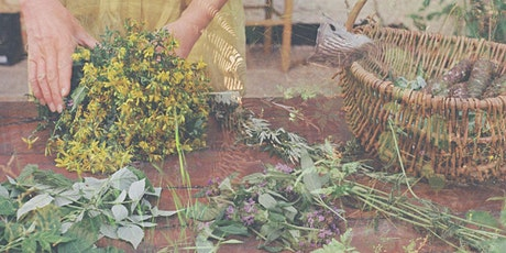 Foraging & Plant Medicine Day Retreat – Summer Edibles & Forest Herbalism Tickets