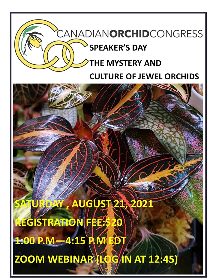 Canadian Orchid Congress Speaker's Day- Jewel Orchids image