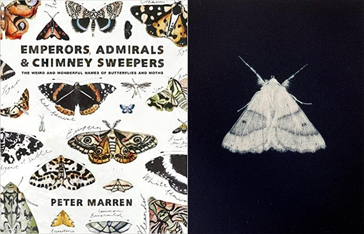 ART AND NATURE MOTH TALK and Sarah Gillespie Exhibition Tour image
