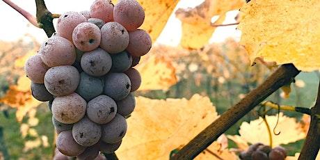 Vinprovning med naturvin Stockholm | Gamla Stans Vinkällare Den 24 October tickets