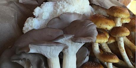 The Dirt on Mushrooms with Stephanie Lipp tickets