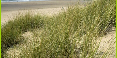 Saturday cleaning of dunes and beach in Bettystown tickets
