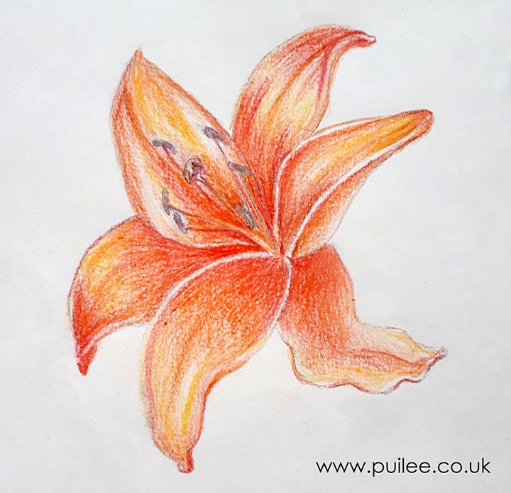 Get Drawing: Lily Flowers Workshop image