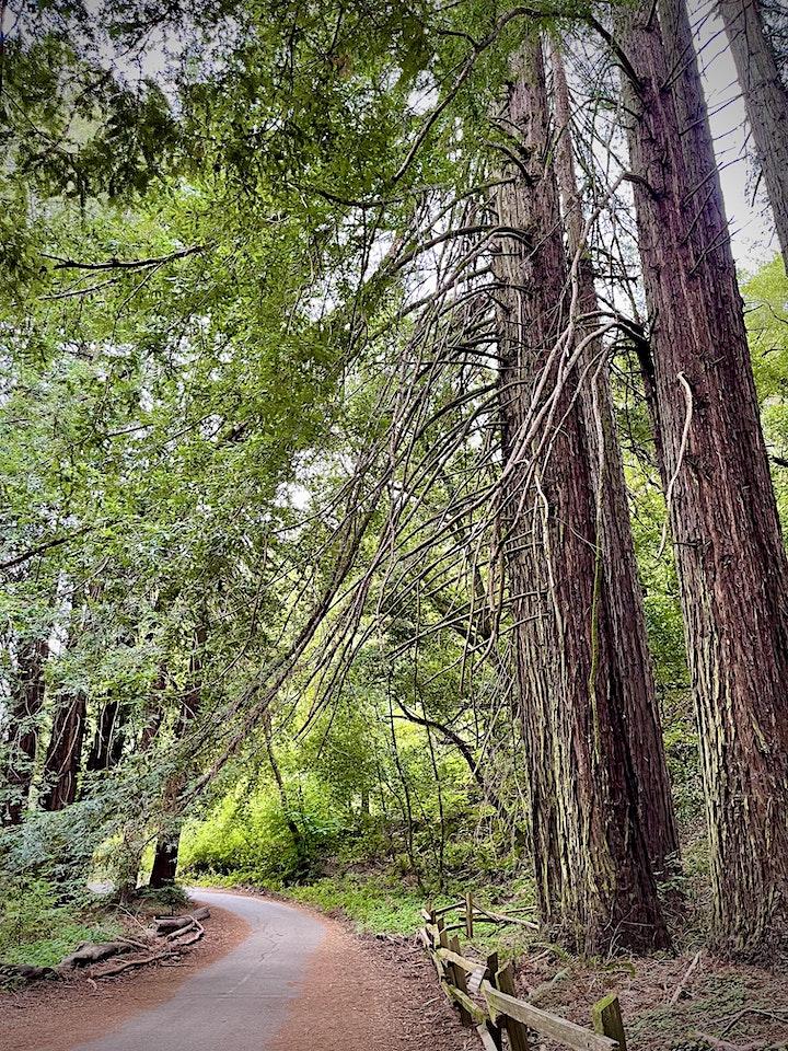2 Hour Forest Bathing Walk image