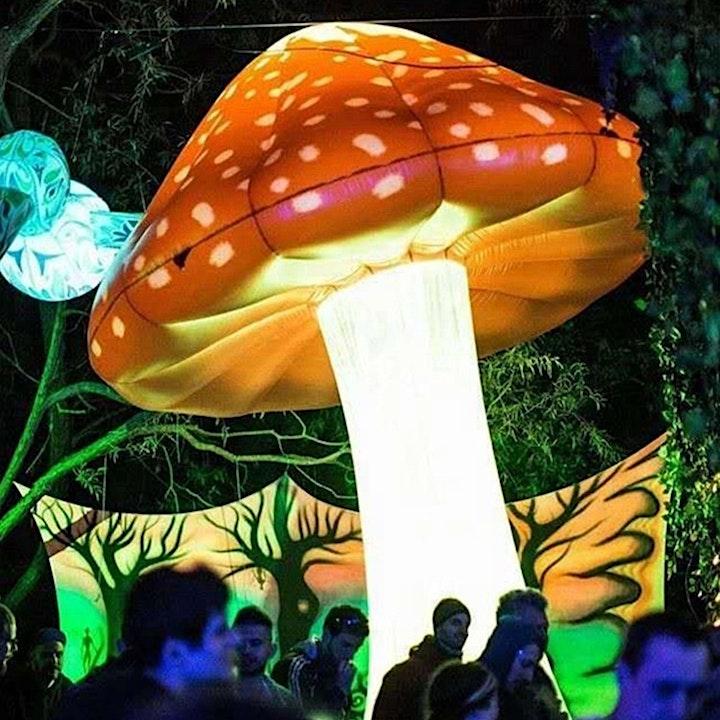 MainPower Light Festival image