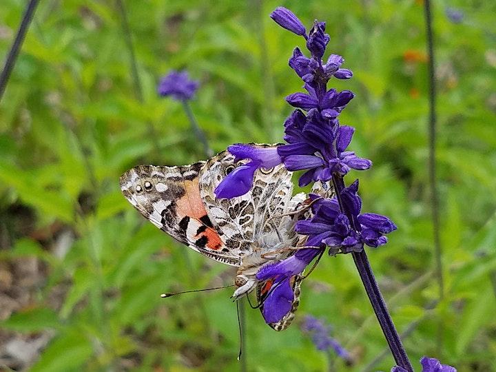 Gardening for Pollinators image