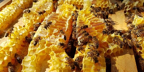 Introduction to Beekeeping - August tickets