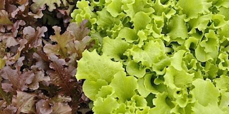Vegetable Gardening Update: Fall Gardening tickets