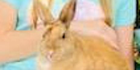 Bunny Yoga Meditation tickets