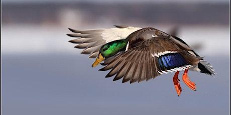 Waterfowl Study Trip tickets
