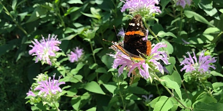 Creating Butterfly Habitats: Through the Seasons tickets
