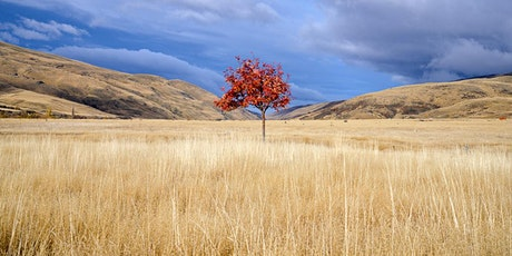 4 Day Expressive Retreat Central Otago Photography Adventure tickets