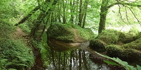 Forest Bathing / Shinrin Yoku -  Summer Saunter tickets