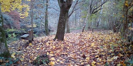 Forest Bathing / Shinrin Yoku - October Autumn Amble tickets