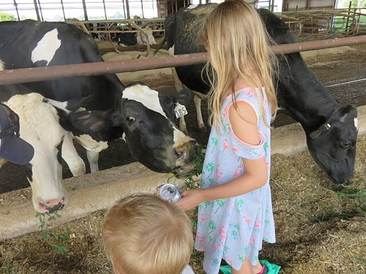 Dine With The Cows at New Day Dairy image