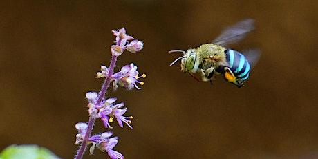 Boroondara bee series #1(a) - Attracting pollinators to your garden tickets