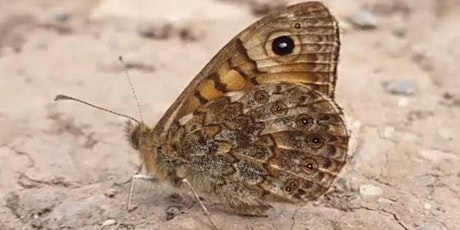 Climate Change Impacts on Butterflies and Moths tickets