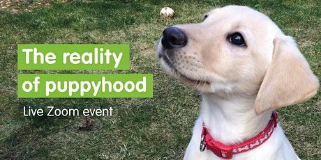 The Reality of Puppyhood - Live Zoom Event tickets
