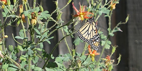 Our Wild Watershed: Monarch Butterflies tickets