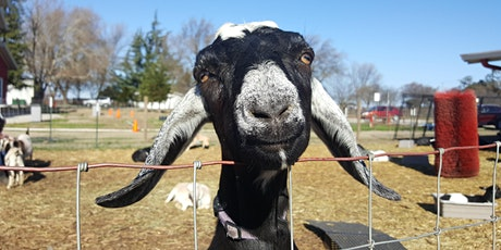 Goat Playpen Time tickets